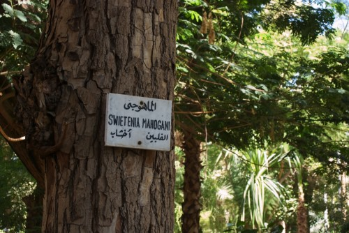 Jardin botanique @ Assouan, Egypte