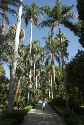 Chat dans le Jardin botanique @ Assouan, Egypte